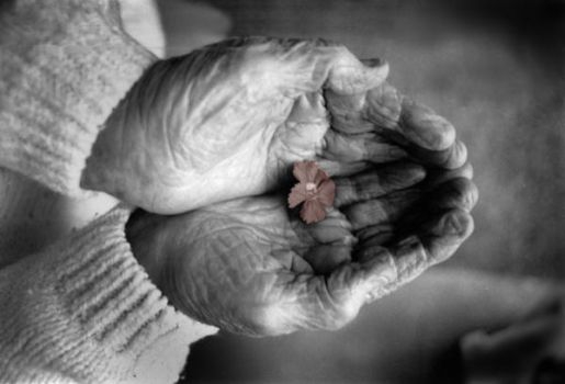 Grandmother Hands by faithwalker