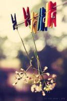 hanging flowers by thresca