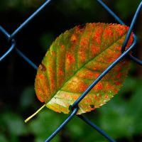 caught in the fence by augenweide