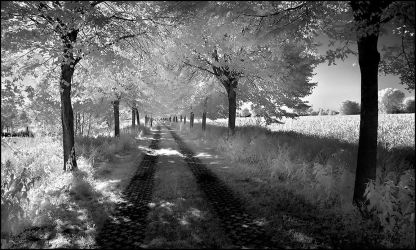 Shady Tree Alley infrared... by MichiLauke