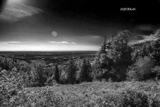 Forest And Plain by IgorKal