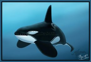 An Orca of a Different Pattern by AquaOrca
