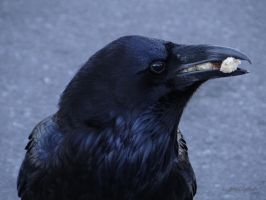Crow........01 by gintautegitte69