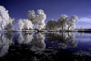 under the moonlight by Konczey-Zsolt