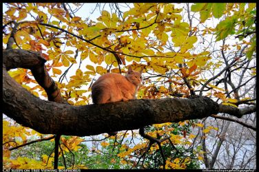 Cat sleeps on a tree viewing Bosphorus by BeYounique