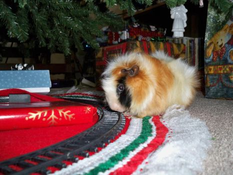 Christmas Pig by pancakes0fredemption