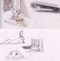 Bunny sketches by pan77155