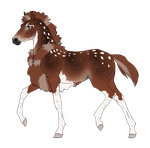 N3185 Padro Foal Design by casinuba