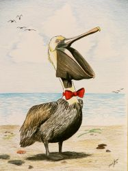 Sophisticated Pelican by Barefoot-Seeker