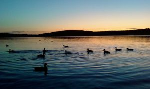 Ducks out on the Lake :) by Cloudoh