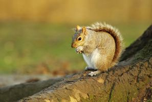 squirrel 1 by thisable