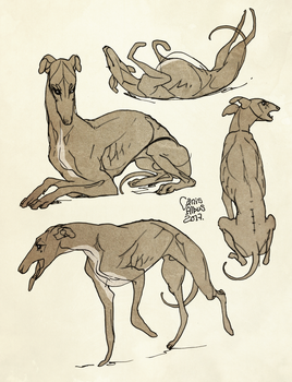 Greyhounds by CanisAlbus
