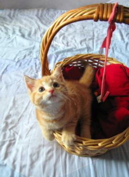 Basket Case by ChrissieCool
