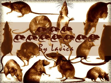 Rat Brushes by Lavica-Photoshop