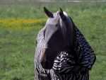 horse suit by awjay