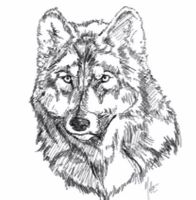 wolf by harusame