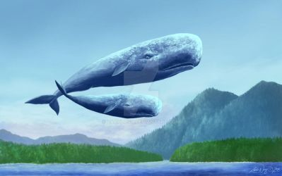 Tofino Whale Watching by zachlost