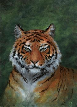 Tiger by Irbeus