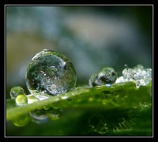 Icy Drops.... by Pjharps