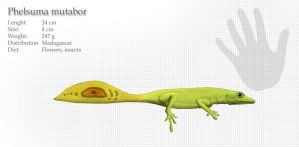Shapeshifting day gecko by Hyrotrioskjan