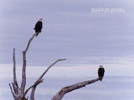 Eagles on a Driftwood Perch by Isquiesque