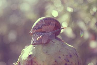 Caracol by Alessandralatte91