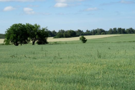 Landscape in summer 106 by MASYON