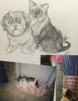 Pet sketch photo fusion by JeansLily