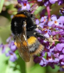 Bumble Bee 2 by juliejools