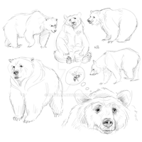 Bear sketches by Natello
