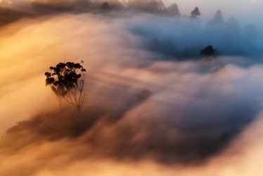Some mist and a tree by carlosthe