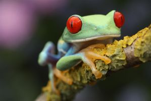 Froggies coming to get you by AngiWallace