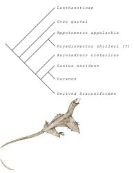 Early dragon phylogeny (after Young et al. 2016) by Hyrotrioskjan