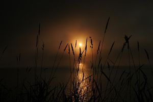August Dawn I by Muskeg