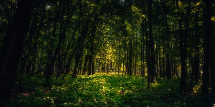 In the woods XII by MoonKey19