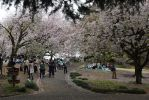 Spring Time Stroll In The Park by Muse-4-Life