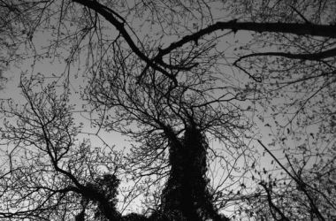 twirling tree by LeaHenning