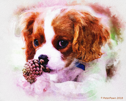 Cavalier Puppy by PeterPawn
