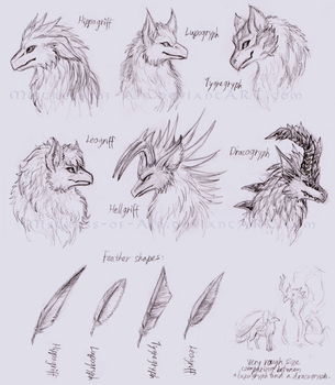 Gryphon species sketches by Sysirauta