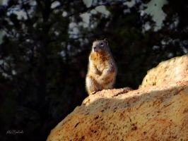Grand Canyons animal...... by gintautegitte69