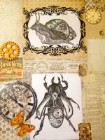 Nature VS Nurture: Snail and beetle close up by Malice-InWonderland
