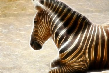 zebra by frosted-fist