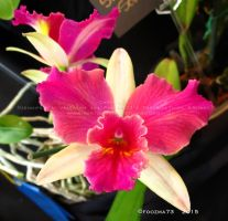Orchid Show 2015 no.2 by Foozma73