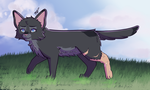 Cinderpelt by drawingwolf17
