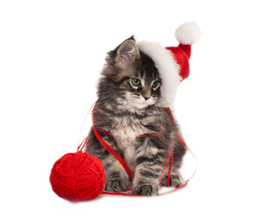 Christmas Kitten PNG by LG-Design