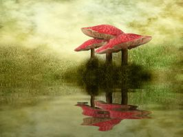 076 Fly Agaric Reflection by Tigers-stock