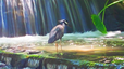 Bird Bathing by Waterfall