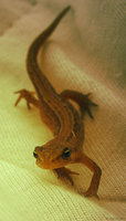 Newt - Photo 01 by LiLaiRa