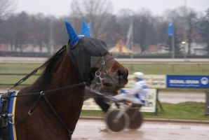 Trot Racing Horse by Hetti-Photograph