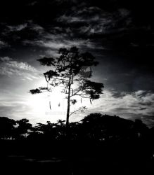 Black and White by 1Antonious